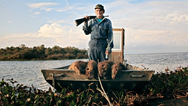 rous1_thomas_gonzales_defending_delacroix_island_louisiana_from_the_invasion_of_nutria-h_2017.jpg