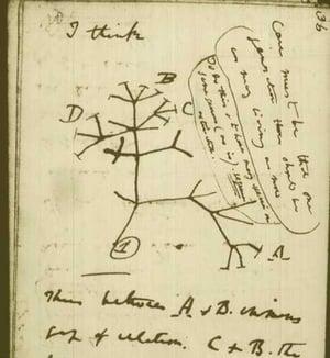 DarwinSketch.article.jpg