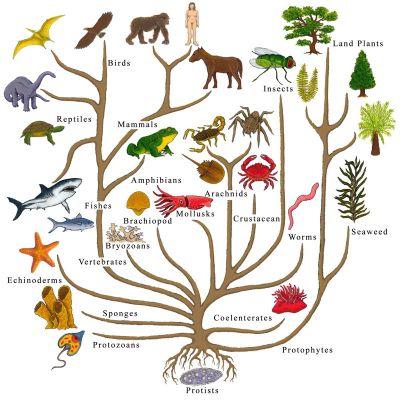 dated-tree-of-life.jpg