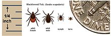 220px-Deer_tick_Ixodes_scapularis.jpg